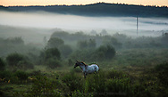 Horse, Mist, near Bragg Creek Alberta