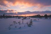 Snow covered landscape of raised bog in colorful sunrise with gentle snowfall, Kemeri National Park (Ķemeru Nacionālais parks), Latvia Ⓒ Davis Ulands | davisulands.com