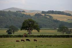 UK ENGLAND ENGLAND STOCKTON 1JUL15 - Livestock on Stockton Farm near the river Camlad on the border between England and Wales in the river Severn catchment area.<br /> <br /> jre/Photo by Jiri Rezac / WWF UK<br /> <br /> © Jiri Rezac 2015