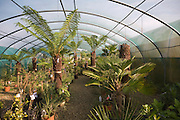 The Exotic Garden Company specialises in plants for a changing climate, Aldeburgh, Suffolk, England