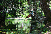 Macapa_AP, Brasil...Comunidade remascente de quilombolas do Curiau, em Macapa, Amapa. Na foto uma crianca pulando no Rio Curiau...The Quilombola remaining of Curiau, in Macapa, Amapa. In this photo a child is jumping in Curiau river...Foto: JOAO MARCOS ROSA / NITRO