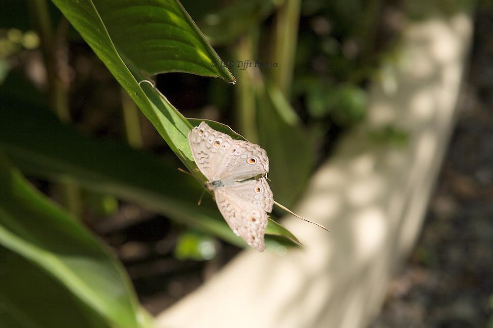 Siem Reap butterfly garden