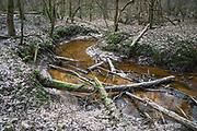 River Vildoga and young elm forest along it, Gauja National Park (Gaujas Nacionālais parks), Latvia Ⓒ Davis Ulands   davisulands.com