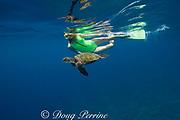 snorkeler with green sea turtle or honu, Chelonia mydas, Kealekekua Bay, Kona, Hawaii Island ( the Big Island ) Hawaiian Islands, USA ( Central Pacific Ocean ) MR 354