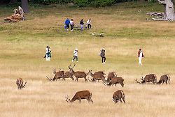 Licensed to London News Pictures. 05/08/2021.Dorking, UK. Walkers enjoy the long grass in Richmond Park, South West London ahead of the rain and wind forecast for the weekend. Today yellow weather warnings for England have been issued for heavy rain, flooding, high winds and lightening with the bad weather expected to continue for the weekend. However brighter weather is forecast for next weeks with highs of 23c. Photo credit: Alex Lentati/LNP