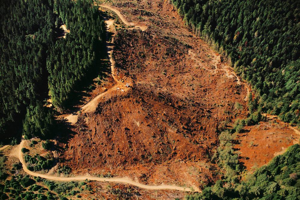Forest clear-cut near Arcata, Humboldt County, California, USA.