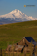 Historic Crawford Ranch barn with spring wildflowers in full bloom at Columbia Hills State Park near Lyle, Washington, USA