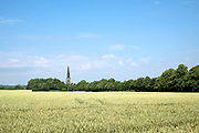 Wheat field and church in Wentworth village on 6 July 2017 in  South Yorkshire, United Kingdom