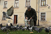 Old woman feeds the birds Zamosc, Poland