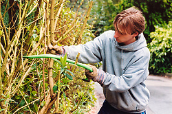 New Deal trainee trimming bush in landscaping project Yorkshire UK