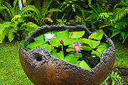 Water lilies, Paleaku Gardens Peace Sanctuary, Kona Coast, The Big Island, Hawaii USA