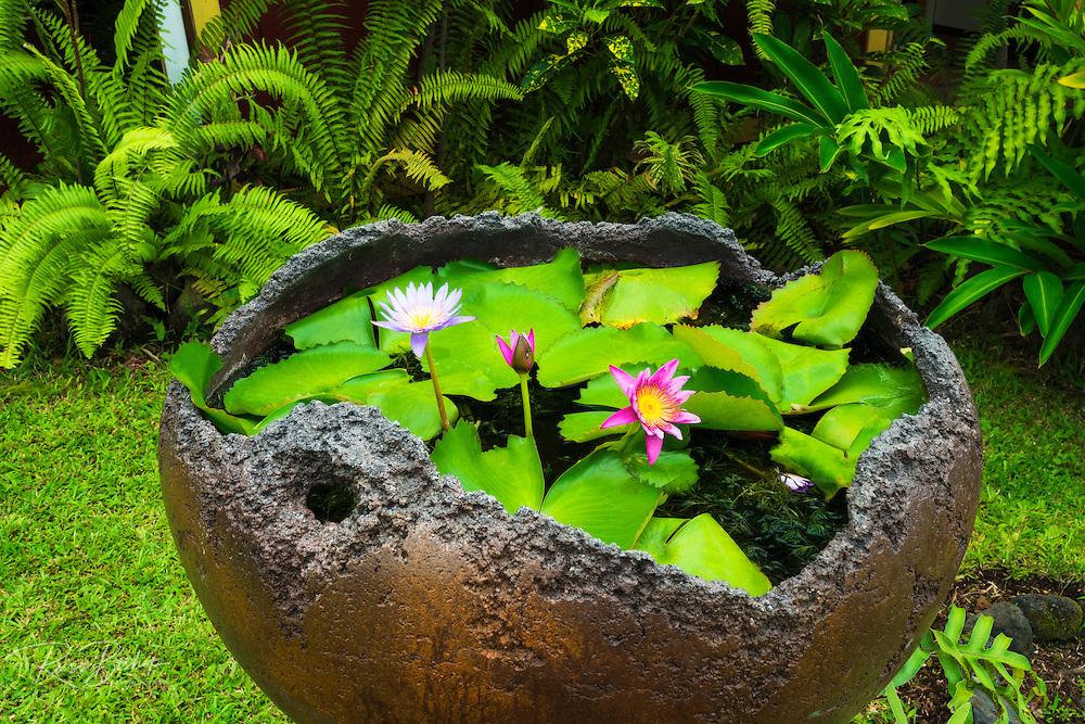 Water lilies, Paleaku Gardens Peace Sanctuary, Kona Coast, The Big Island, Hawaii USA