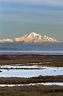 View of Mount Baker across the marshes of Boundary Bay Regional Park in Delta, British Columbia, Canada