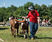 Derek Ladd of Epsom guides Duke and Diamond in the short horns log skid at Belknap County's 4H Fair Sunday morning.  (Karen Bobotas/for the Laconia Daily Sun)