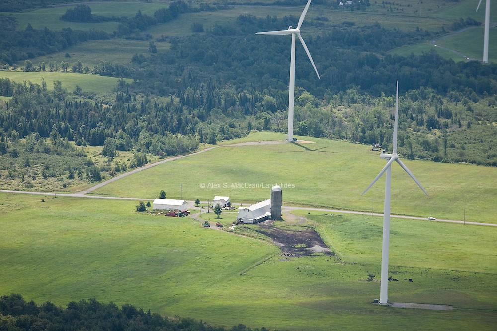 Maple Ridge Wind Farm - Each turbine tower is 260 feet (79 m) tall. Each turbine has blades 130 feet (40 m) long, which, added to the hub diameter, gives a rotor diameter of 270 feet.