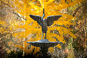 fall foliage in Sarah P Duke Gardens<br /> <br /> Roney Fountain with ginko in background