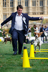 © Licensed to London News Pictures. 08/09/2016. London, UK. MP for Cardiff North, CRAIG WILLIAMS performs with his Welsh Springer Spaniel whilst taking part in Westminster Dog of the Year competition in Victoria Tower Gardens, London on Thursday, 8 September 2016. Photo credit: Tolga Akmen/LNP