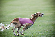 Lure Coursing at Wine Country Circuit