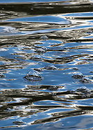 Bubbles bobbing on the Herring River in Harwich