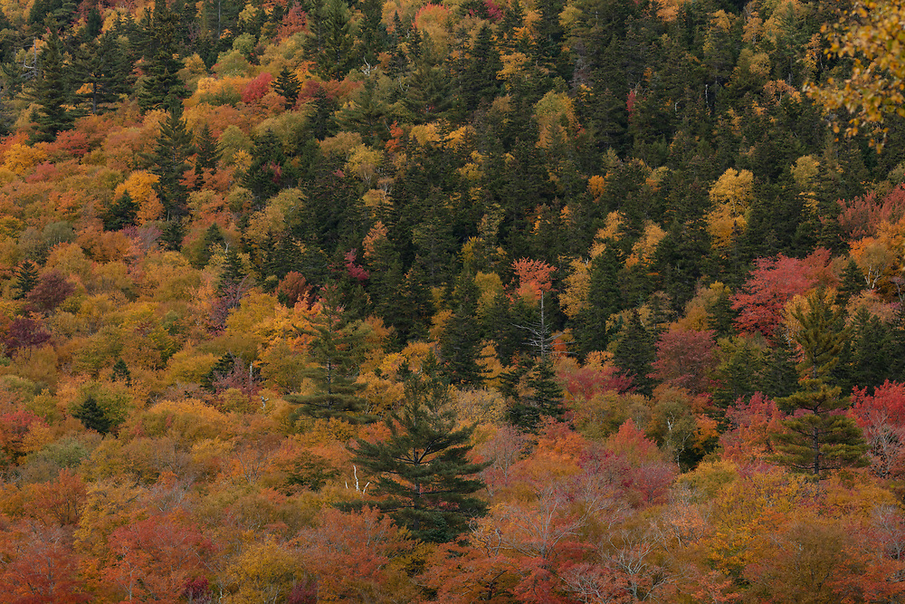 Fall colors mixing with the evergreen trees within Crawford Notch.