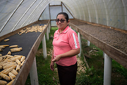 """Dilma Chávez is a small-scale coffee farmer in San Luis Planes, Santa Bárbara, Honduras. She is a member of the Montaña Verde cooperative. """"On my farm and my husbands farm we have a lot of fissures on the farm, and some landslides. The roads are badly damaged, some of them you can't pass. We are having to fix the small roads into the farms ourselves, there's no help from the government. The coffee is suffering a lot from fungal infections, ojo de gallo, leaf rust, and it's very hard to control with so much moisture, it will probably spread and gets worse. This year we'll have a big drop in production, everyone in the coop will suffer, it's big. And that affects us all economically. And some houses have been affected, in the two villages called El Zapote. We grow most of our own food here, and all those crops have also be affected, the corn, the beans, with so much rain we've lost a lot of that too."""""""