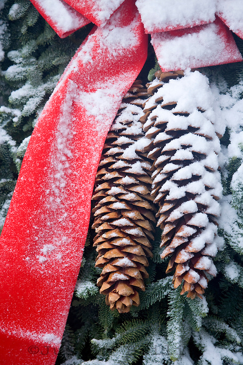 Snow on holiday pine cones and red ribbon.