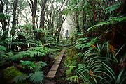 Hiker, Kamakou Preserve, Maolokai, Hawaii<br />
