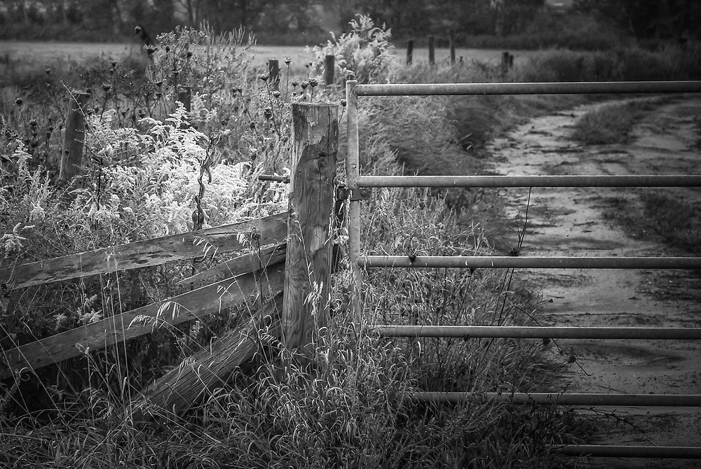 At sunset, even a closed farm fence becomes something beautiful.