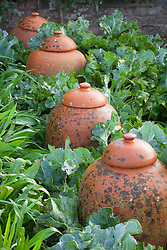 Line of terracotta rhubarb forcers in the kitchen garden at West Dean, East Sussex