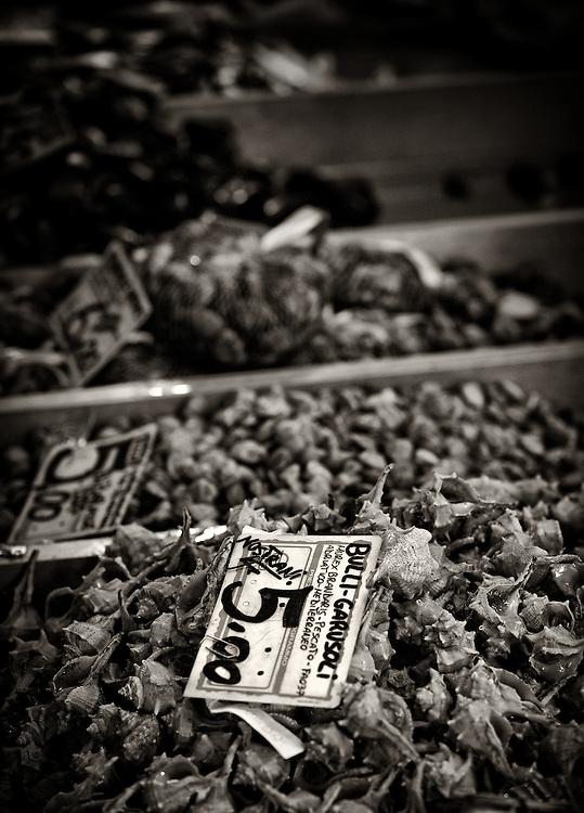 Italy - Chioggia - Scallops on fish market