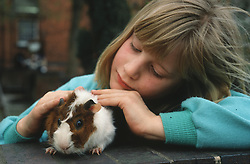 Young girl stroking pet guinea pig,