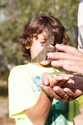 Boy holding bird before releasing after bird banding and measurement, Mitchell Lake Audubon Center, San Antonio, Texas, USA.