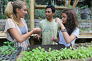 """Final year students learning about organic gardening at Green School<br /><br />The Green School (Bali) is one of a kind in Indonesia. It is a private, kindergarten to secondary International school located along the Ayung River near Ubud, Bali, Indonesia. The school buildings are of ecologically-sustainable design made primarily of bamboo, also using local grass and mud walls. There are over 600 students coming from over 40 countries with a percentage of scholarships for local Indonesian students.<br /><br />The impressive three-domed """"Heart of School Building"""" is 60 metres long and uses 2500 bamboo poles. The school also utilizes renewable building materials for some of its other needs, and almost everything, even the desks, chairs, some of the clothes and football goal posts are made of bamboo.<br /><br />The educational focus is on ecological sustainability. Subjects taught include English, mathematics and science, including ecology, the environment and sustainability, as well as the creative arts, global perspectives and environmental management. This educational establishment is unlike other international schools in Indonesia. <br /><br />Renewable energy sources, including solar power and hydroelectric vortex, provide over 50% of the energy needs of the school. The school has an organic permaculture system and prepares students to become stewards of the environment. <br /><br />The school was founded by John and Cynthia Hardy in 2008."""