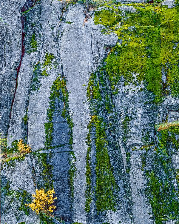 Autumn design, Icicle Creek area, Alpine Lakes Wilderness, Cascade Mountains, Washington, USA