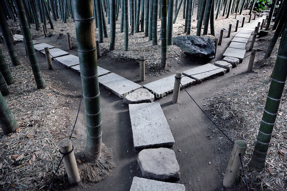 stone path in a bamboo forest garden Kamakura Japan