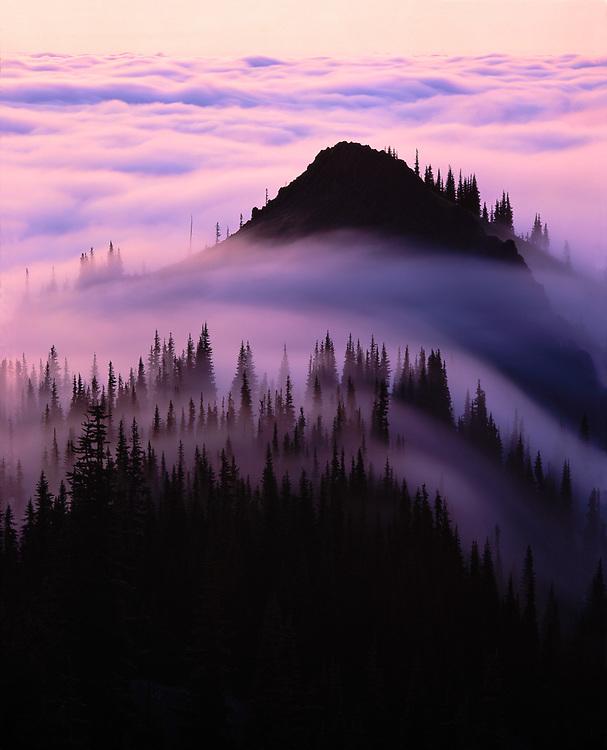View toward Stegathaurus Ridge from Blue Mountain, evening fog., Olympic National Park, Washington, USA