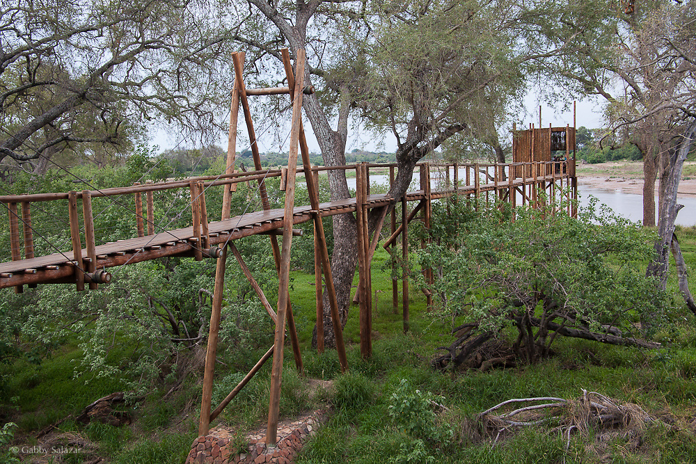 Boardwalk out to the Limpopo River in Mapungubwe National Park, South Africa.