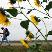 Mark J. Hainds, of Alabama, walks past flowers on US 281 along the Texas border with Mexico Friday in Hidalgo County. Hainds has been walking east along the Texas/Mexico border from El Paso since late October and expects to end his journey in Brownsville this Sunday. <br /> Nathan Lambrecht/The Monitor