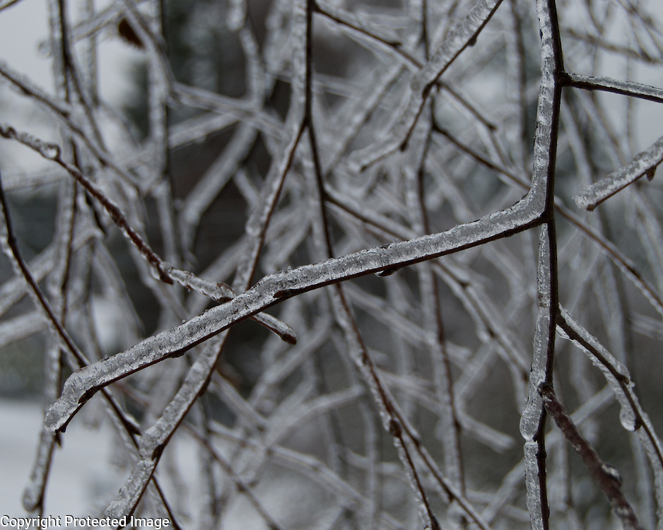 An extremely rare ice storm coated this everything and made for some amazing photographic opportunities.