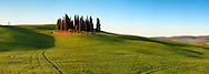 Probably the most photographed bunch of cypress trees in the whole world. Taken about 40 minutes after sunrise in the beautiful fields between San Quirico d'Orcia and Montalcino in Tuscany, Italy, this is stitched from eight vertical frames.