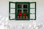 Red Gernaiums growing in flower pots on a rural Slovenian village window sill, on 18th June 2018, in Kupljenik, Slovenia.