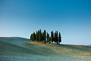 Grove of cypress trees in landscape by San Quirico D'Orcia in Val D'Orcia, Tuscany, Italy