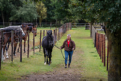 Broeckaert Wanna, BEL, Amor D.J.<br /> Stal Oud Molenhuis - Lubbeek 2019<br /> © Hippo Foto - Dirk Caremans<br />  25/09/2019