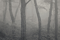 Foggy forest scene from Smuggler's Notch, Stowe Vermont