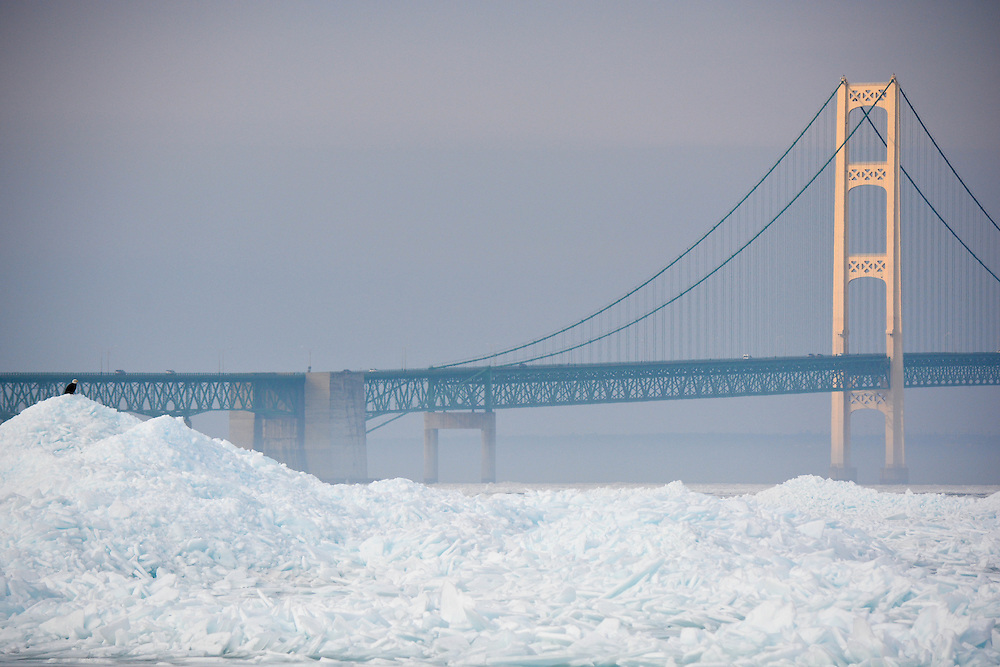 The Mackinac Bridge Illuminated In The Midst Of Morning Fog While A Bald Eagle Keeps Watch