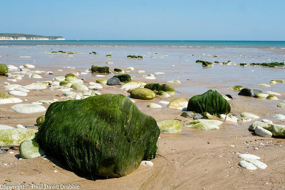 Bridlington North Beach green seaweed covered rocks and pebbels<br /> <br />   05 July 2018 <br />   Copyright Paul David Drabble<br />   www.pauldaviddrabble.co.uk