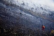 Nova Lima_MG, Brasil...Incendio no Parque Estadual Serra do Rola Moca...The fire in the State Park Serra do Rola Moca...Foto: JOAO MARCOS ROSA / NITRO