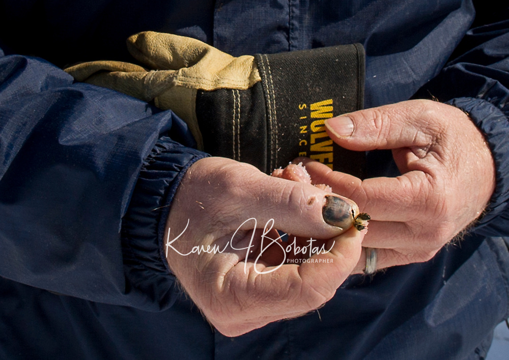 McCormack's Bee Farm in Gilmanton.    ©2019 Karen Bobotas Photographer