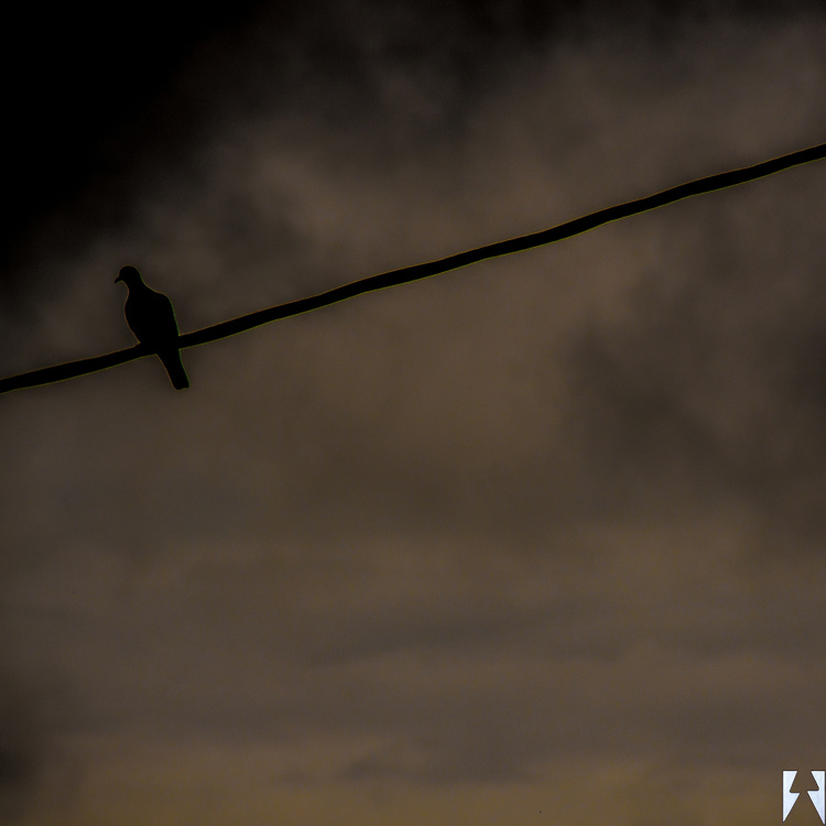 The silhouette of a blackbird on a fat wire with the backdrop of black clouds lifting.