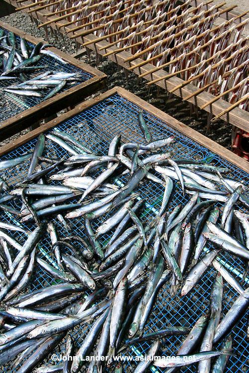 Drying Fish at Japanese Fish Market